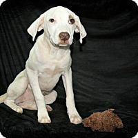 Adopt A Pet :: Patty - Lufkin, TX