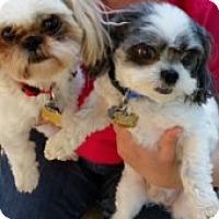 Adopt A Pet :: Sweet Pea & Button - Jacksonville, FL