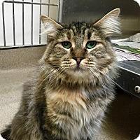 Adopt A Pet :: Sissy - Visalia, CA
