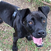 Adopt A Pet :: Fred - Millersville, MD