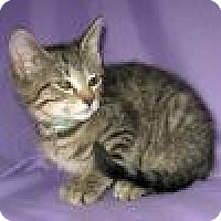 Adopt A Pet :: Weston - Powell, OH