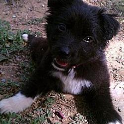 Photo 3 - Labrador Retriever/Golden Retriever Mix Dog for adoption in Fresno, California - Madison