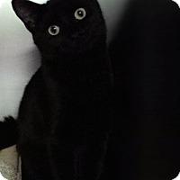 Adopt A Pet :: Chara - Toronto, ON