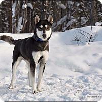 Adopt A Pet :: Aurora - Pitt Meadows, BC