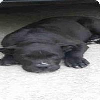 Adopt A Pet :: A379384 - San Antonio, TX