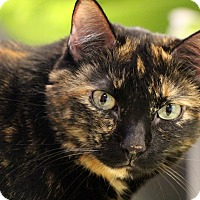 Adopt A Pet :: Zailey - Sarasota, FL