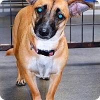 Adopt A Pet :: Dolly - San Jacinto, CA
