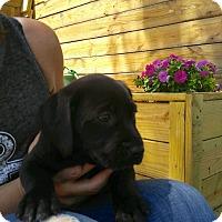 Adopt A Pet :: June Bug - Barnegat, NJ