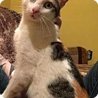 Adopt A Pet :: Angel - Cheltenham, PA