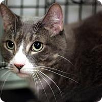 Adopt A Pet :: Ray - New York, NY