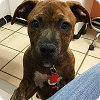 Adopt A Pet :: Shemar Moore - Holly Springs, NC