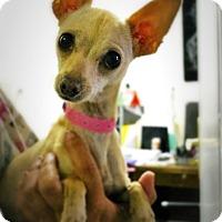 Adopt A Pet :: BizzyBody - Casa Grande, AZ