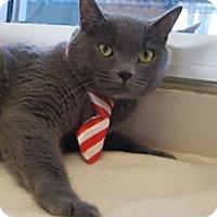 Adopt A Pet :: Nerf - McKinney, TX