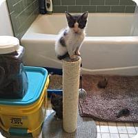 Adopt A Pet :: Barbara - New York, NY