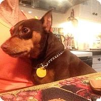 Adopt A Pet :: Cali (Courtesy Posting) - Malaga, NJ