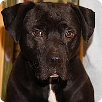 Adopt A Pet :: Monroe - Marietta, OH