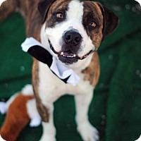 Adopt A Pet :: Rocky - Tucson, AZ