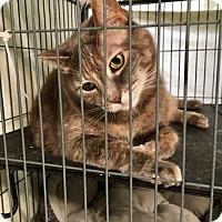 Adopt A Pet :: Maria - Dickson, TN
