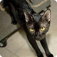Adopt A Pet :: Stella FE2-9052 - Thibodaux, LA
