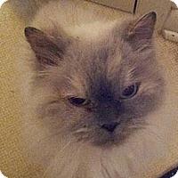 Adopt A Pet :: Josephine - Columbus, OH