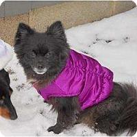 Adopt A Pet :: Cola - Hilliard, OH