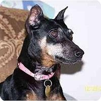 Adopt A Pet :: Annabelle#1 - Nashville, TN