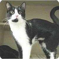 Adopt A Pet :: Lexie - Mesa, AZ
