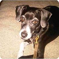 Adopt A Pet :: Mouse - GA - Croton, NY