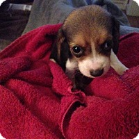Adopt A Pet :: Copper - Hazard, KY