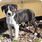 Adopt A Pet :: Paltrow