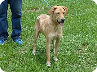 Labrador Retriever Mix Dog for adoption in Slidell, Louisiana - Millie