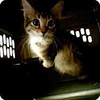 Adopt A Pet :: MAISIE - Conroe, TX