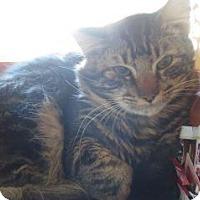 Adopt A Pet :: Benny - Wildomar, CA
