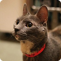 Adopt A Pet :: Minnie Midas - Marlborough, MA