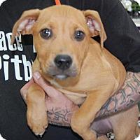 Adopt A Pet :: Loki - Brooklyn, NY