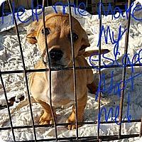 Adopt A Pet :: Jerry CUTE LITTLE FELLOW - Sussex, NJ