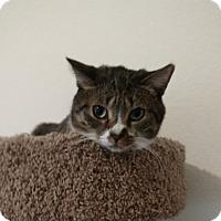 Adopt A Pet :: Buttons - Scottsdale, AZ