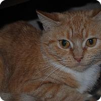 Adopt A Pet :: Roma - Lafayette, NJ