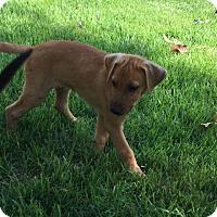 Adopt A Pet :: Macon - Buffalo, NY