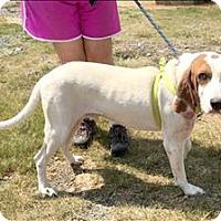 Adopt A Pet :: Garth - Cleveland, TN