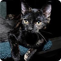 Adopt A Pet :: Nallie - Mississauga, Ontario, ON