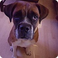 Adopt A Pet :: Benny - Aurora, IL