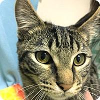 Adopt A Pet :: Squash - Colorado Springs, CO