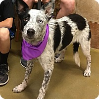 Adopt A Pet :: Doobie - Manhattan, KS