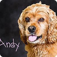 Adopt A Pet :: Andy - Somerset, PA