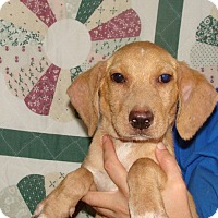 Adopt A Pet :: Kell - Oviedo, FL