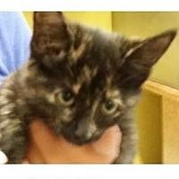 Adopt A Pet :: OPIE - Red Bluff, CA