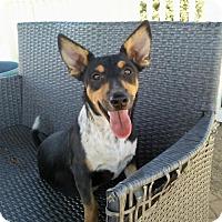 Adopt A Pet :: Darby - Castaic, CA