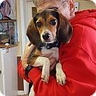Adopt A Pet :: Oscar *Needs Foster*
