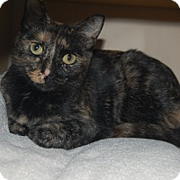 Adopt A Pet :: Isabelle - Salem, NH